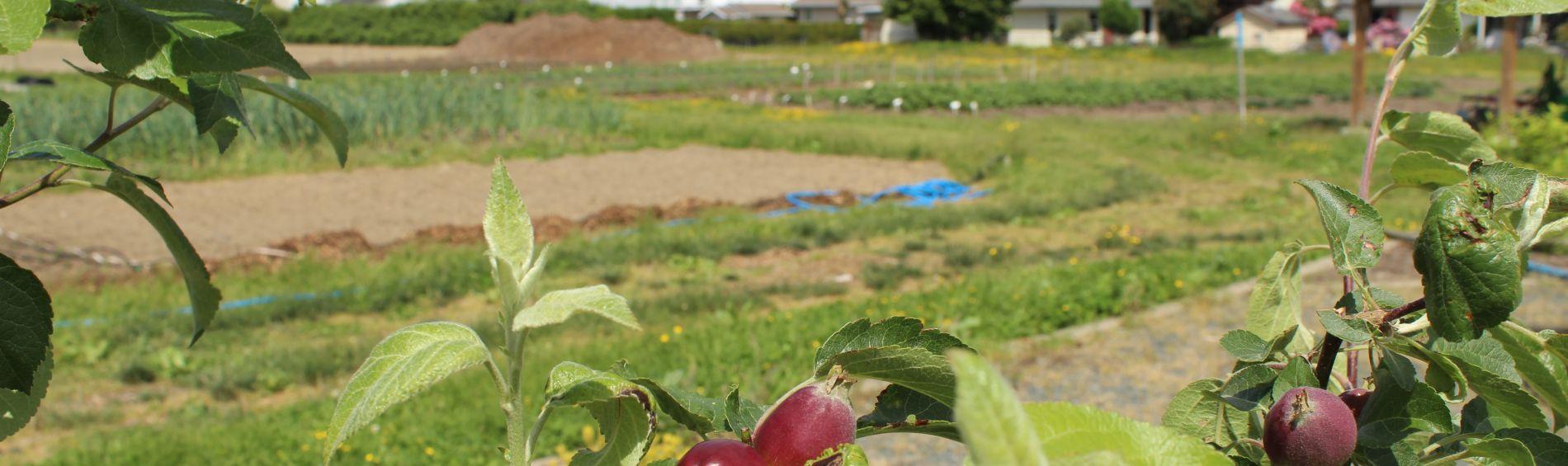 Sardis Farm